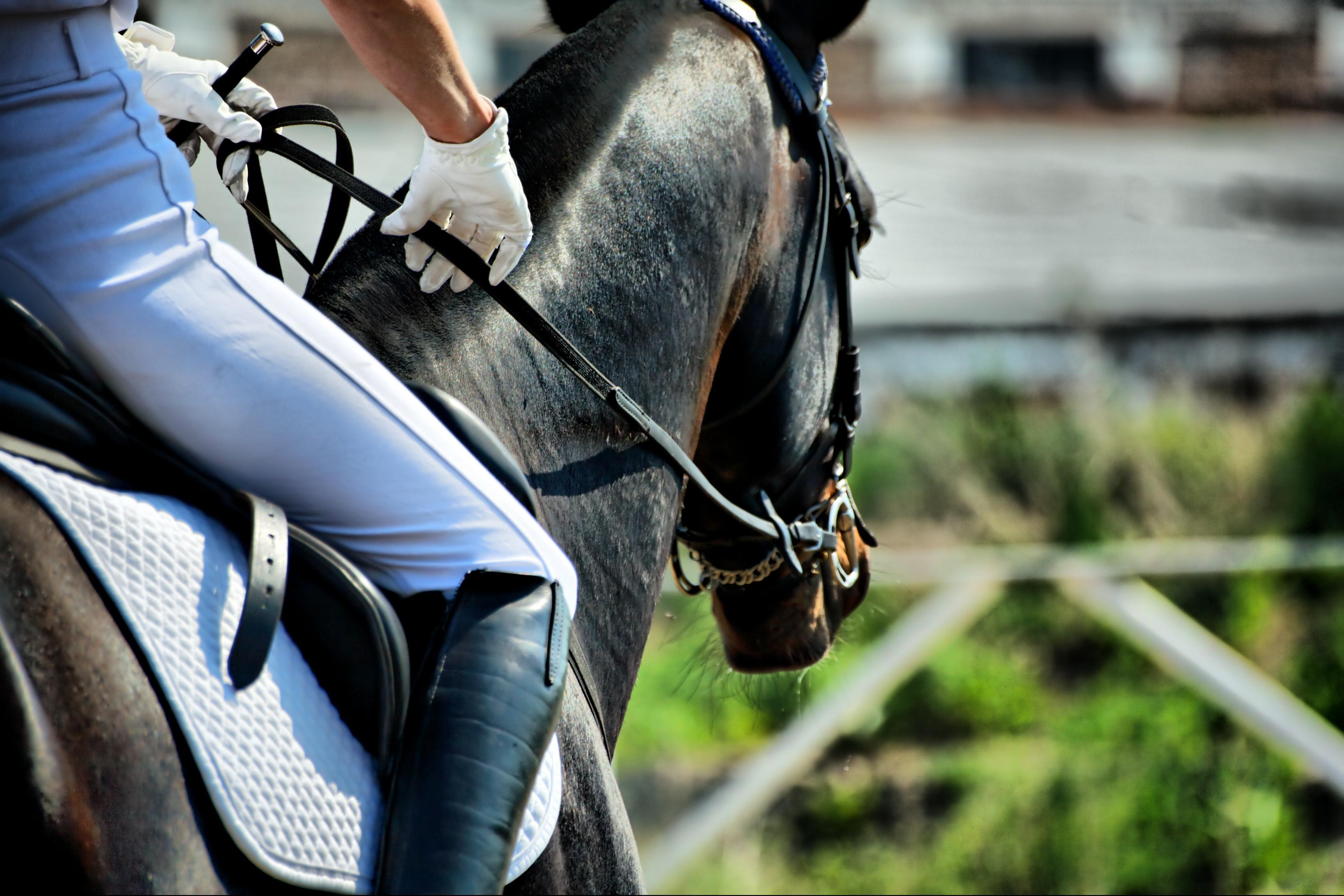 Czyszczenie osprzętu jeździeckiego