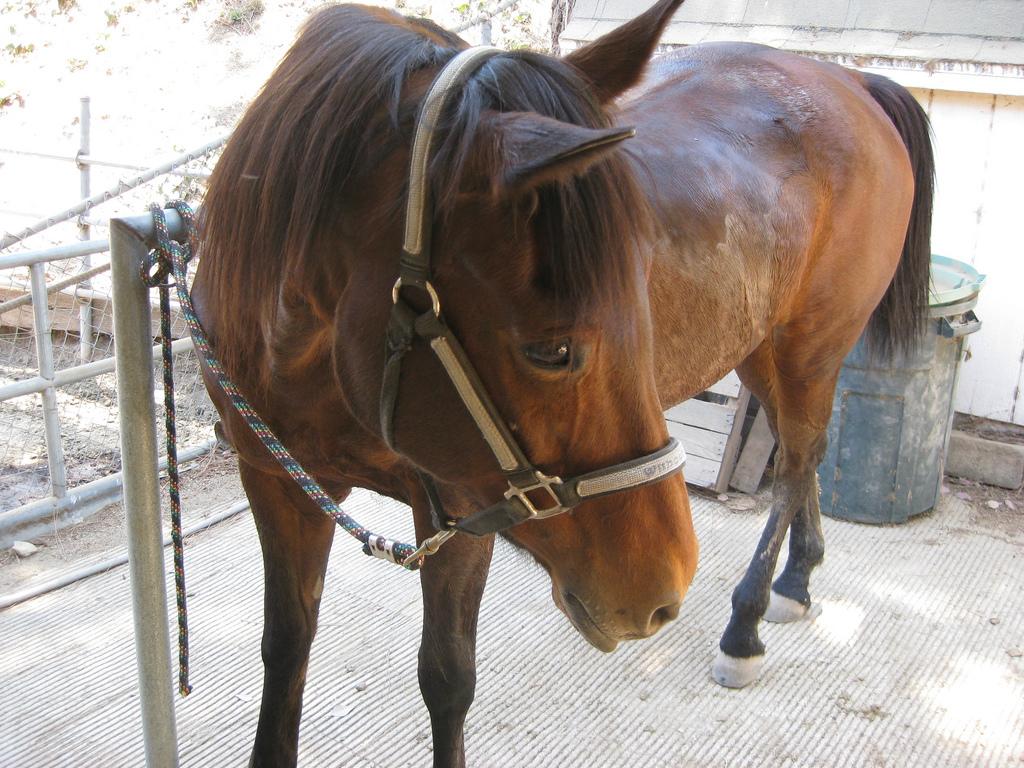 Ochrona nóg konia przed urazami